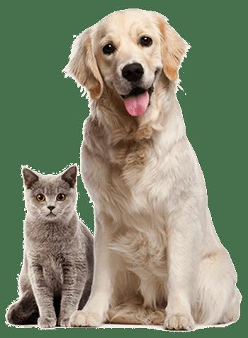 Dangerous Dog Insurance